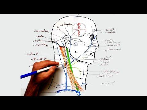modul în care teraflex tratează articulațiile boli grave ale genunchiului