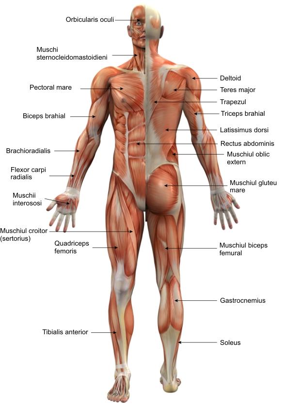 ce doare când mănânci articulații tratament cu bilă medicală a genunchiului
