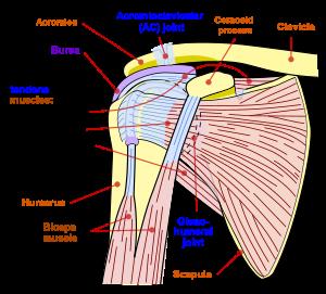 durere sub articulația sub axilă și umăr amigdalita durerii articulare