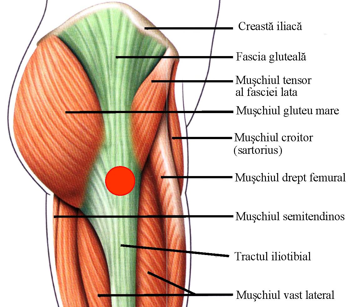 articulația genunchiului doare 30 de ani când articulațiile doare ceea ce ajută