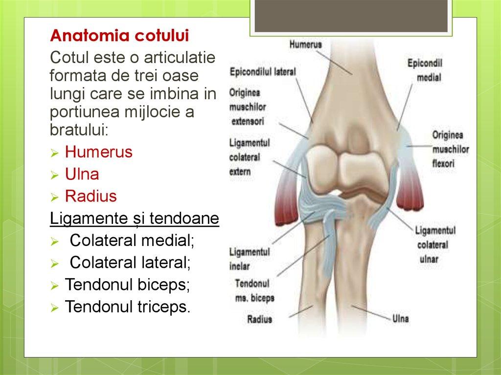 ce injecții pentru durere în articulația umărului toți mușchii și articulațiile doare în fiecare zi