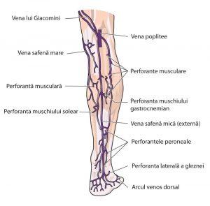 Simptomele mielomului și diagnosticul