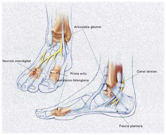 tratamentul ligamentelor și articulațiilor umărului