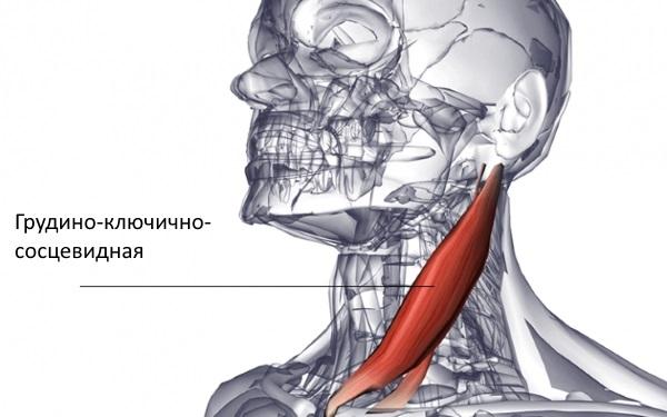 deteriorarea mușchilor ligamentelor articulațiilor