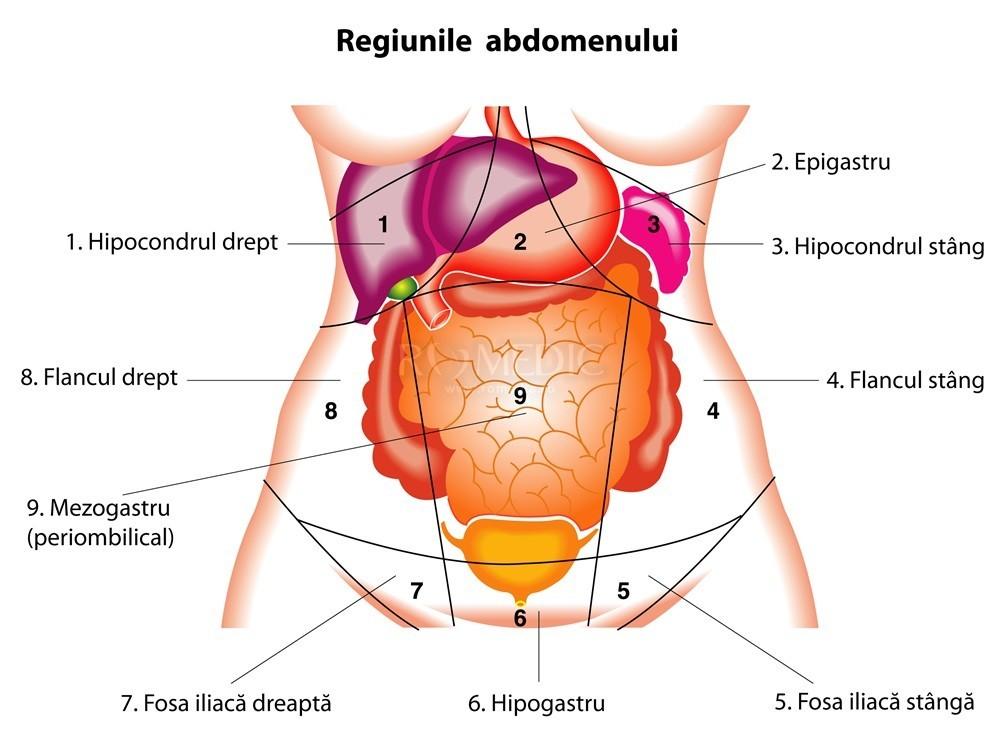 dureri la nivelul articulațiilor umărului și hipocondrului de ce ai articulația de șold