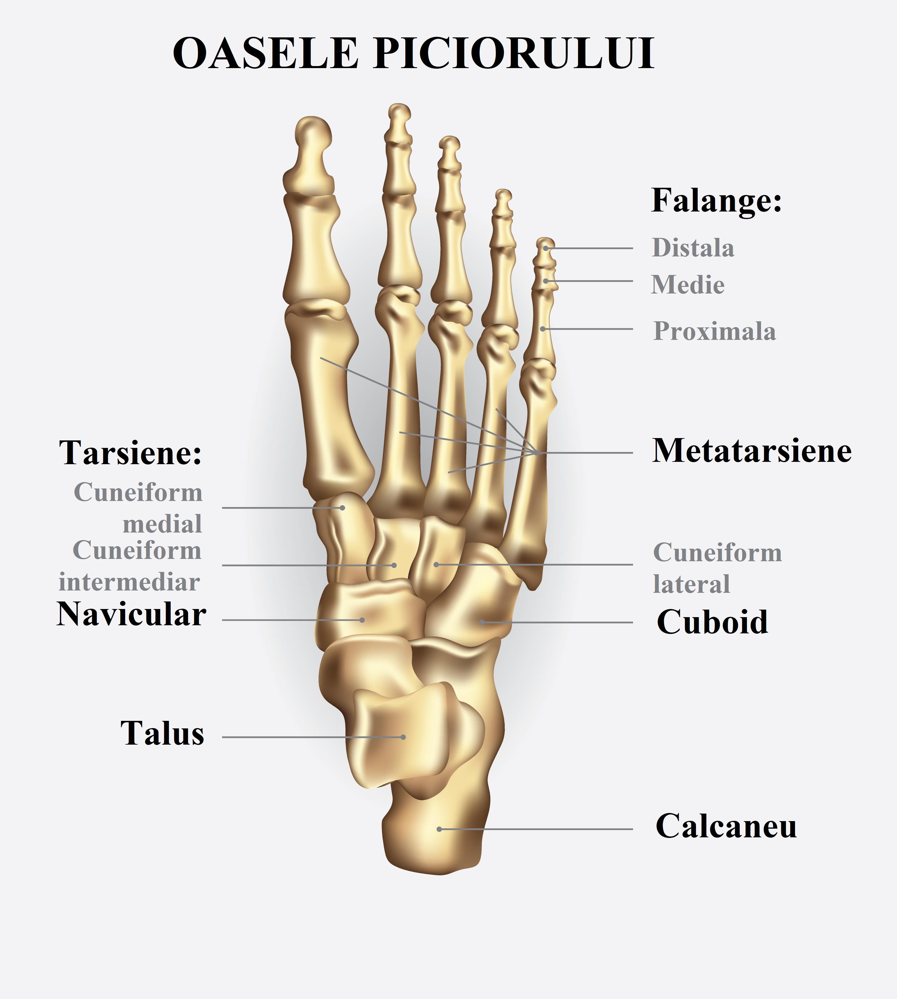 boala articulară semnează un tratament ganglionii limfatici se inflamează și rănesc articulațiile