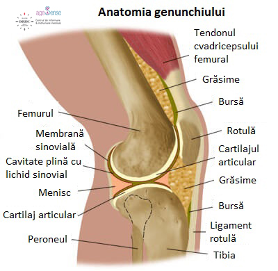 durere în articulația genunchiului și mușchii ameliorați inflamația articulară acest lucru