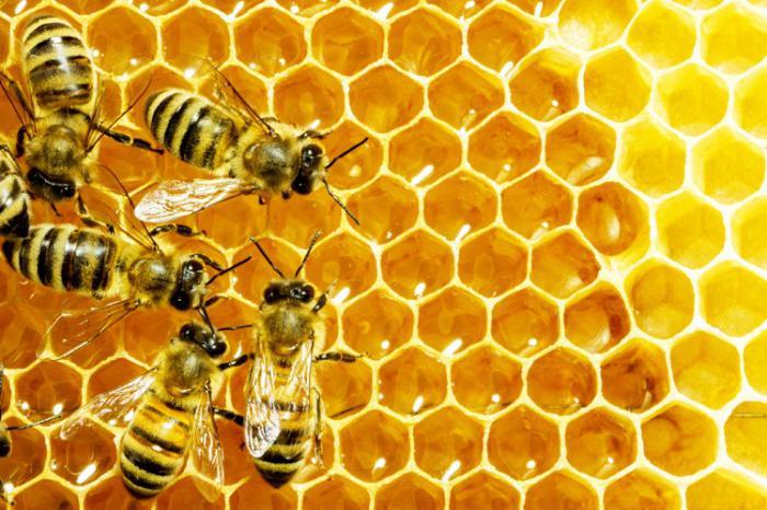 Tratamentul cu venin de albină, miracol sau otravă: explicaţia specialiştilor
