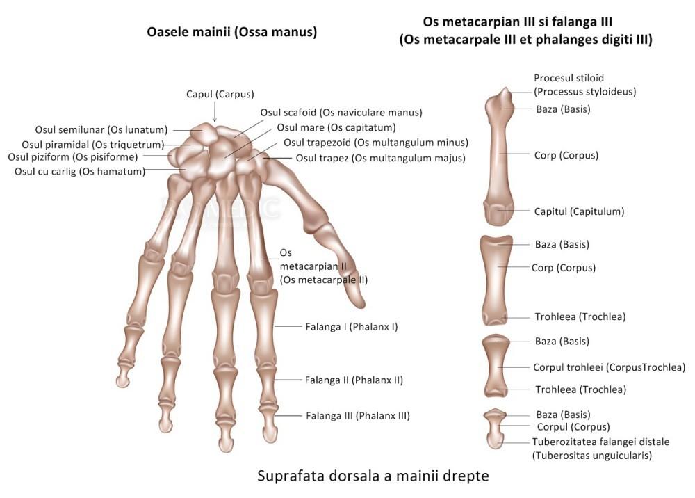 boala articulară în articulație