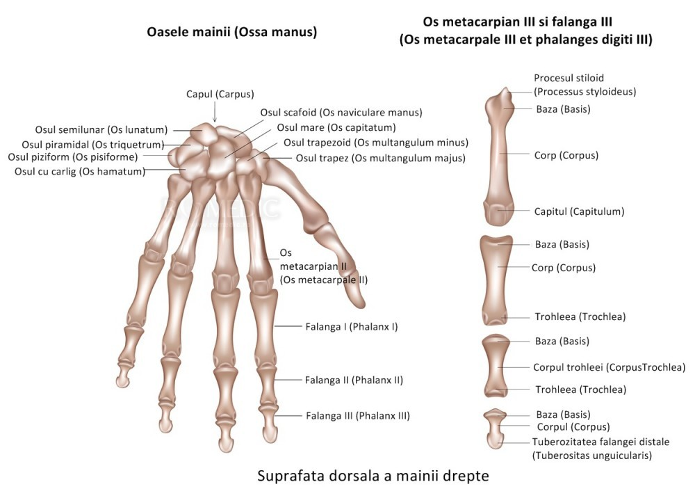 mersul genunchiului cu artroza genunchiului