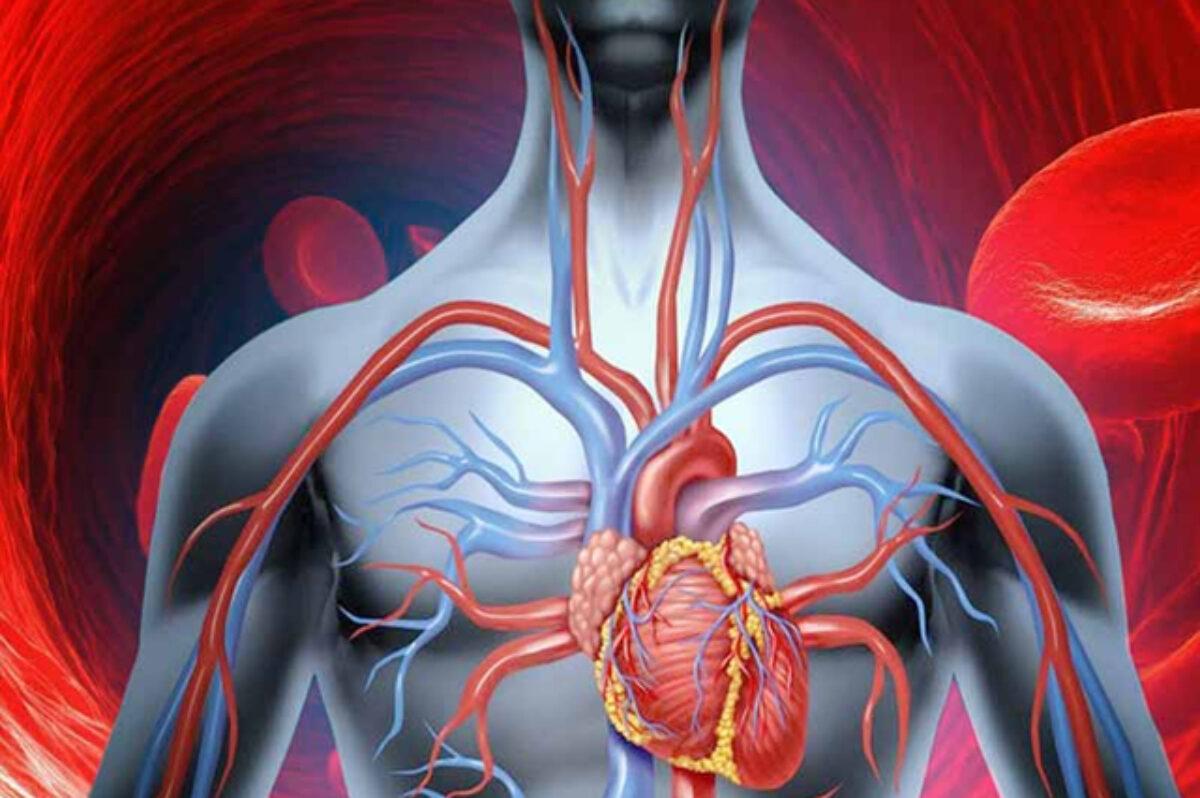 articulațiile doare din cauza circulației deficitare vitamine cu condroitină și glucozamină preț