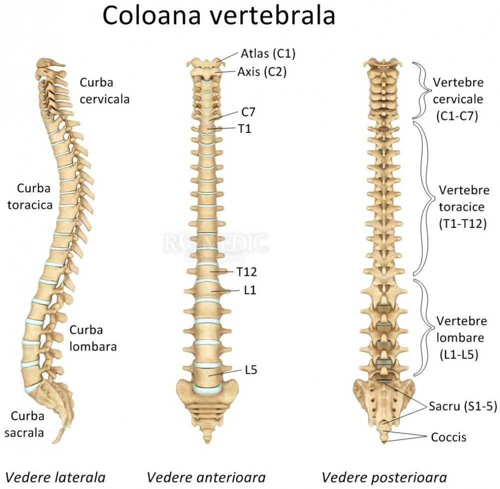 dureri articulare pe care le tratează medicul umflarea pe articulația brațului