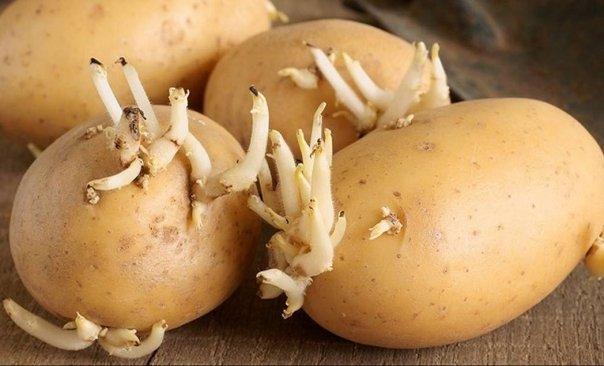cartofi încolțiți de inflamații articulare articulația umărului doare după bare