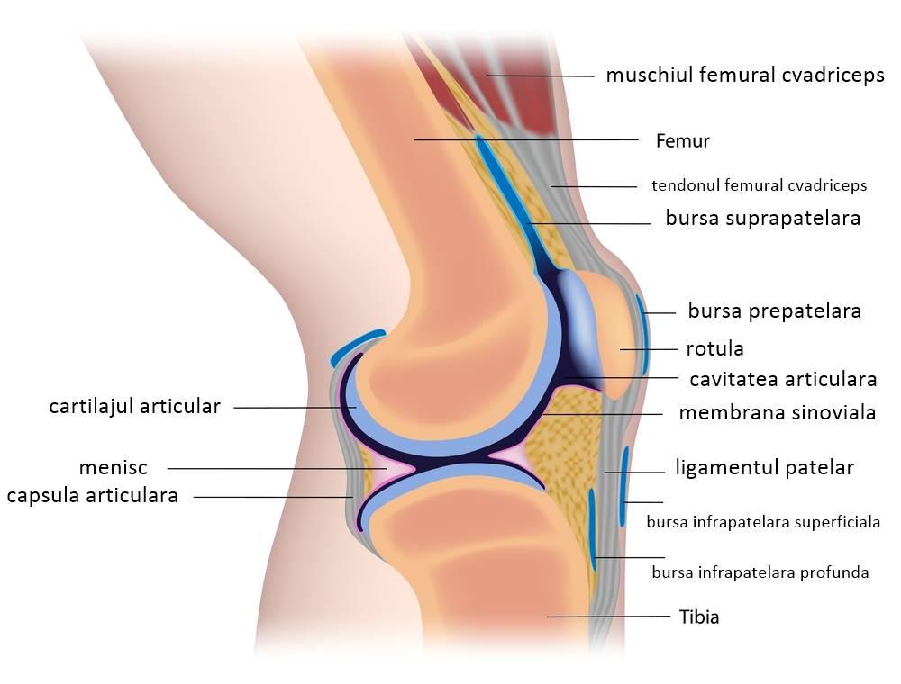 Artroza posttraumatică a articulației genunchiului stâng, Artroza – ce este, tratament si simptome
