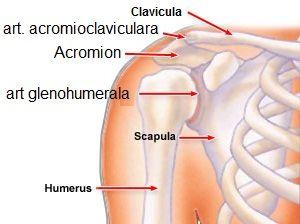 cum să tratezi o articulație de umăr rănită tratament alternativ al articulațiilor