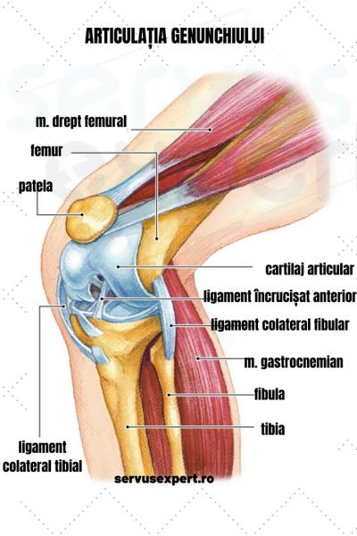 inflamația artritică a genunchiului