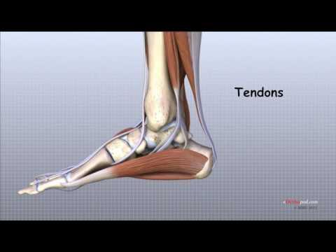 inflamația oaselor gleznei izbucnind dureri la genunchi când ghemuit