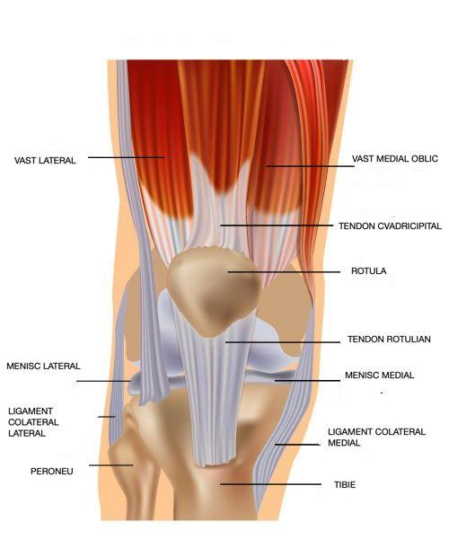 Simptomele de afectare a tendoanelor genunchiului