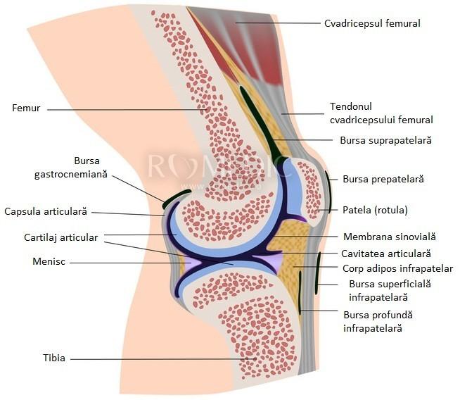 tratament articular bubunovsky