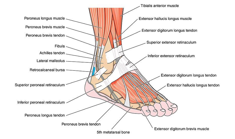 fractură a articulației gleznei tratament degradant al artrozei